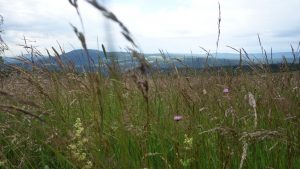 Bystrzyckie łąki